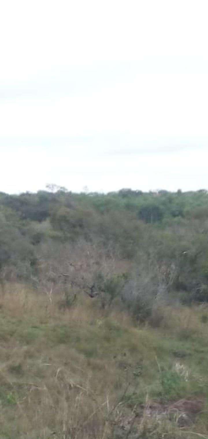 45 hectáreas en Valenzuela - 1