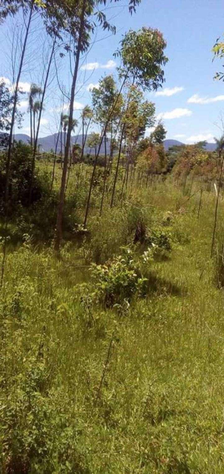 65 hectáreas en Tobatí - 2