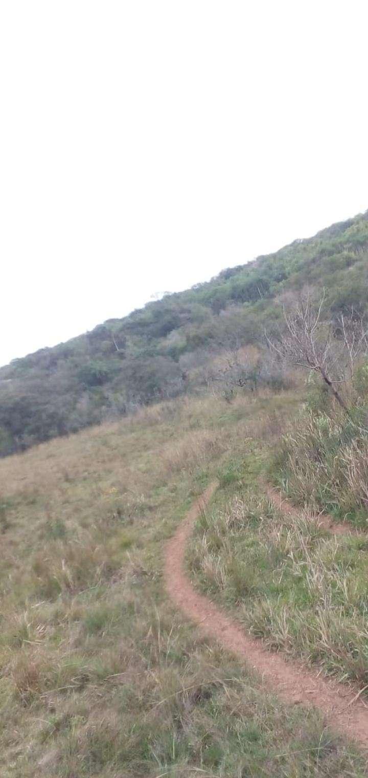 45 hectáreas en Valenzuela - 3