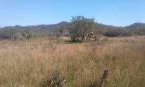 12 hectáreas en Caacupé