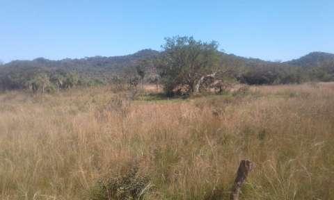 12 hectáreas en Caacupé - 0