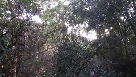 12 hectáreas en Caacupé - 1