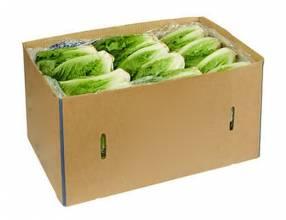 Caja de lechugas 12 unidades
