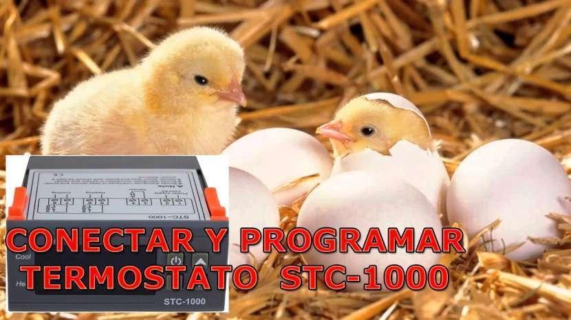 Termostato digital con sonda STC-1000 para incubadora - 1