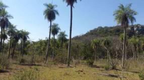 Terreno de 9 hectáreas en Piribebuy