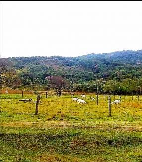 6 hectáreas en Paraguarí