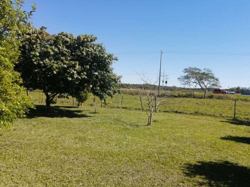 Campo en Cnel. Oviedo s/ asfalto Dr Blas Garay - 2