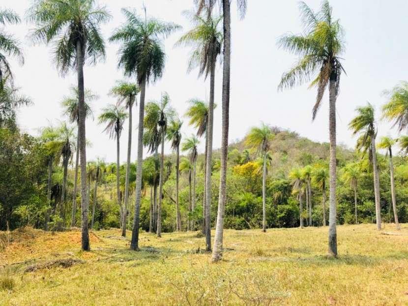 Terrenos 50 hectáreas con arroyo y casa familiar - 0