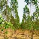 Terrenos 50 hectáreas con arroyo y casa familiar - 2