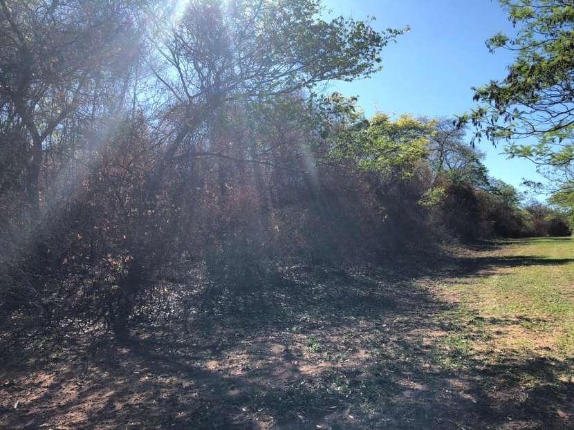 2 terrenos en Patiño con vista al lago Ypacaraí - 3