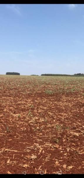 Terreno de 100 hectáreas en Yataity del Norte