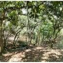 10 hectáreas en Caacupé - 4