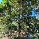 Terreno 62 hectáreas en zona de Tebicuary-mí - 6