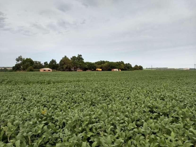 434 hectáreas en Hohenau 5 - 1