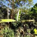 Terreno 62 hectáreas en zona de Tebicuary-mí - 4