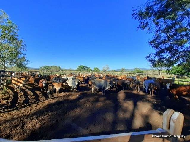 Estancia 430 hectáreas en La Colmena - 6