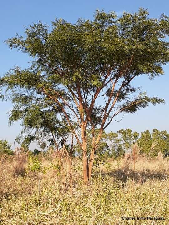 Terreno 14 hectáreas con casa y arroyo en La Colmena - 1
