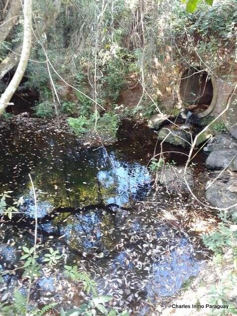 Terreno de 6 hectáreas en La Colmena Tebicuary - 5