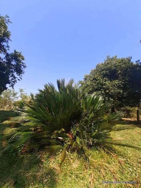Terreno 25 hectáreas con casa y arroyo en en La Colmena - 5