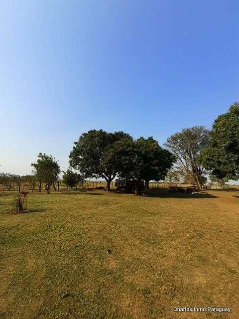 Estancia de 330 hectáreas en Quiindy - 7