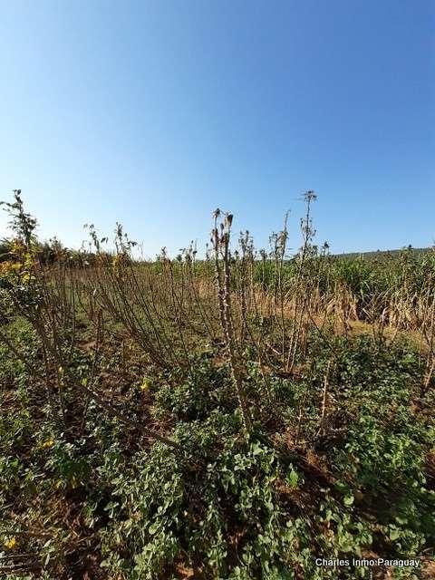Terreno de 6 hectáreas en La Colmena Tebicuary - 4