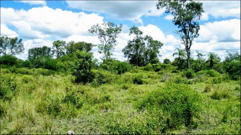 45 hectáreas en Villa Oliva costa sobre rio para puerto - 4