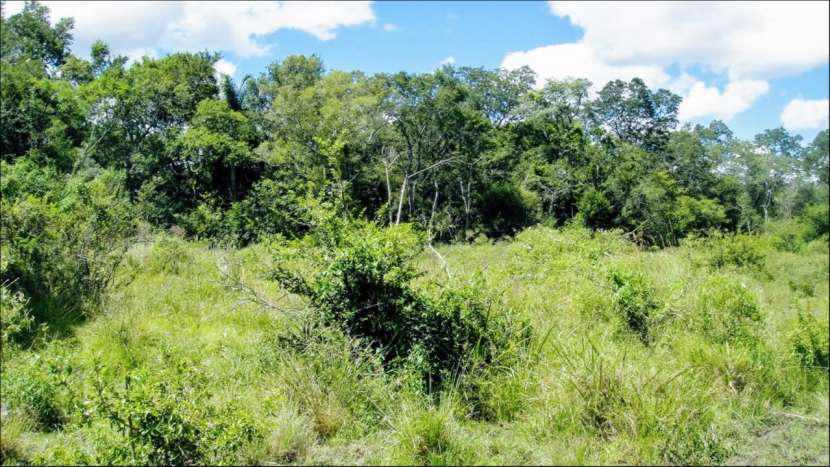 45 hectáreas en Villa Oliva costa sobre rio para puerto - 3
