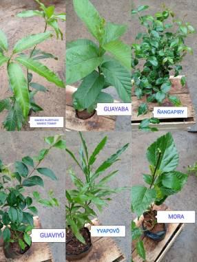 Plantas frutales