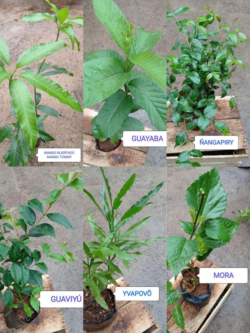 Plantas frutales - 0