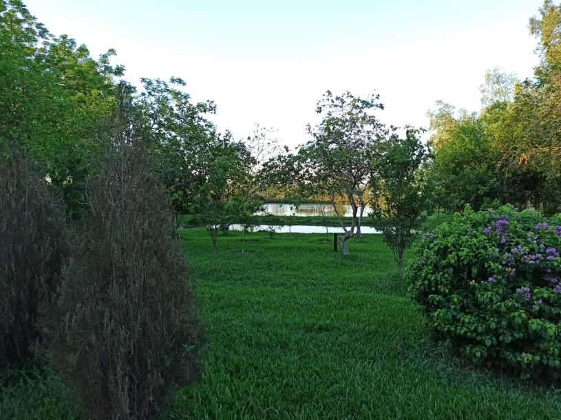 Terreno 3 hectáreas con 2 galpones de crianza - 8