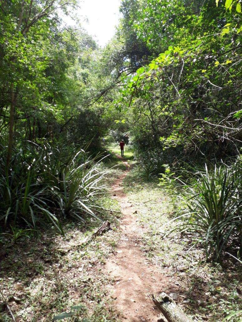Terreno de 118.000 hectáreas en el Chaco - 0