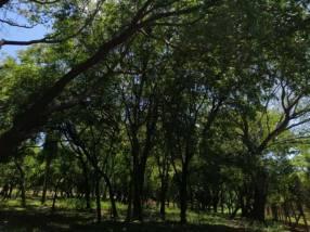 3 hectáreas en Piribebuy