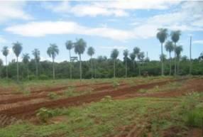 Campo de 13.6 hectáreas en Pirayu
