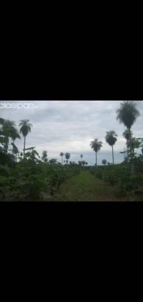 Estancia de 22.500 hectáreas