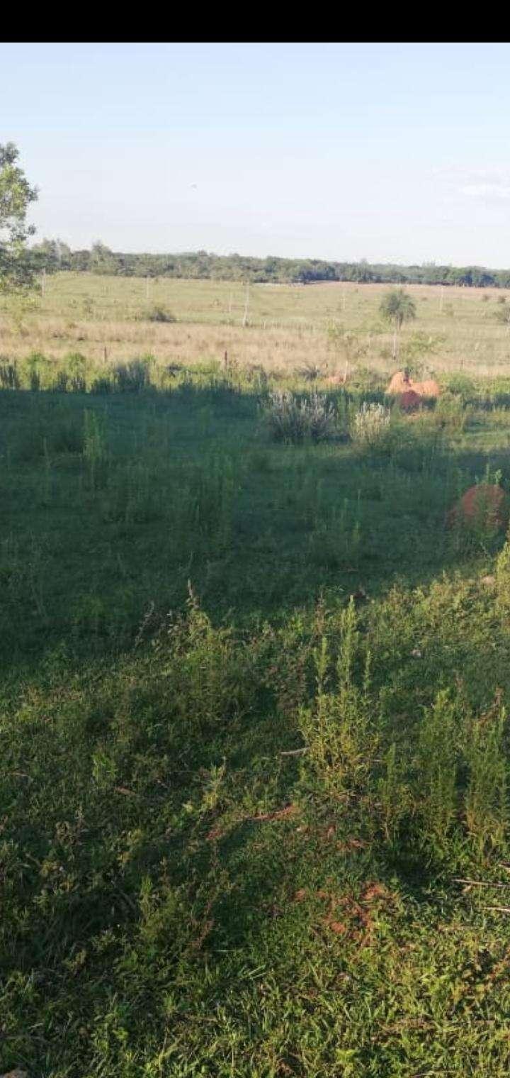 Establecimiento ganadero de 80 hectáreas s/ ruta asfaltada - 3