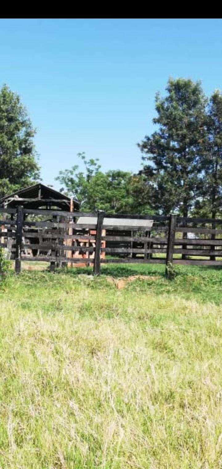 Establecimiento ganadero de 80 hectáreas s/ ruta asfaltada - 4