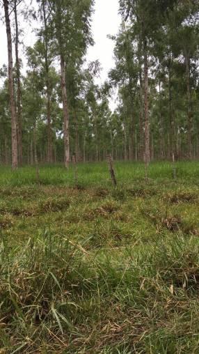 Terreno de 363 hectáreas