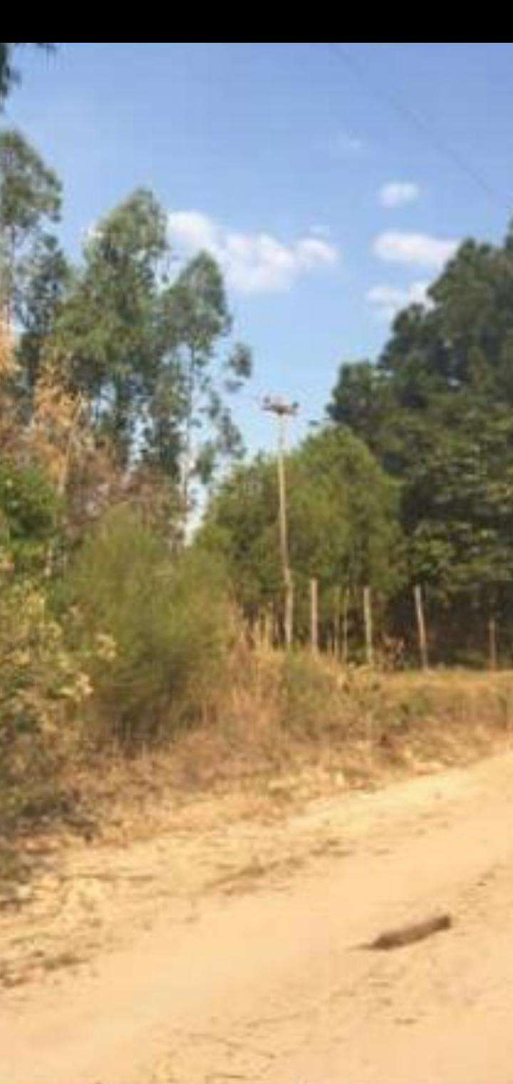 Terreno de 4 hectáreas - 6