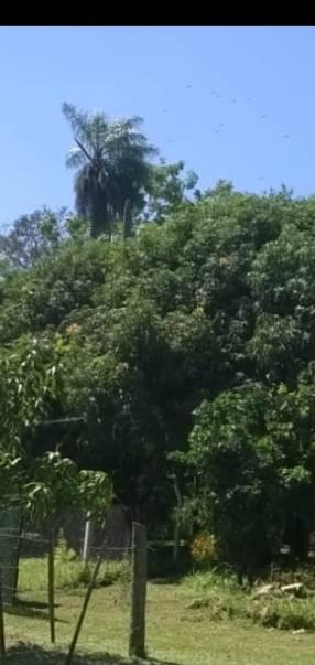14.5 hectáreas en Caacupé