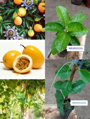 Variedad de Plantas Frutales