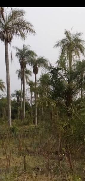 5 hectáreas en Eusebio Ayala
