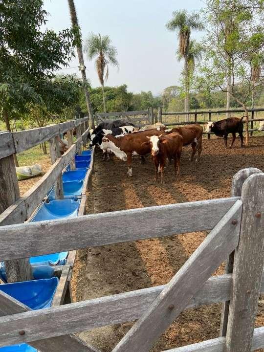 Granja en Loma Grande - 4