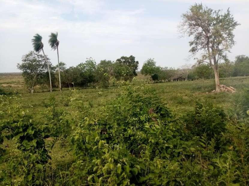 Terreno de 15 hectáreas - 1
