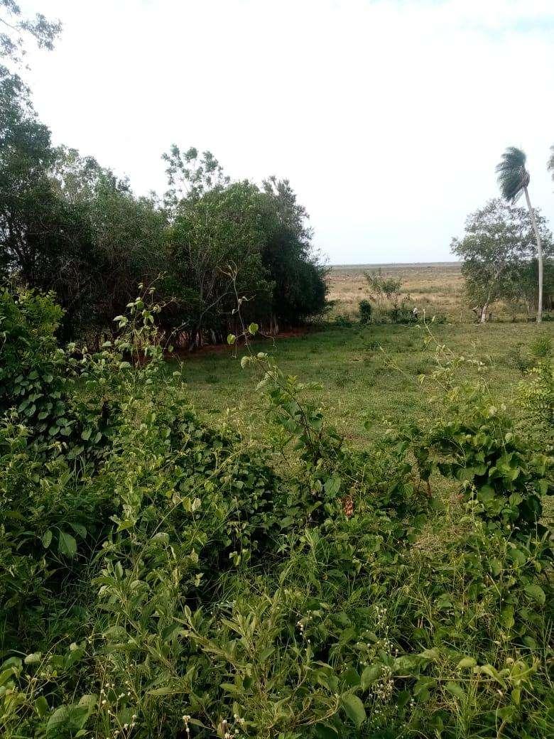 Terreno de 15 hectáreas - 2