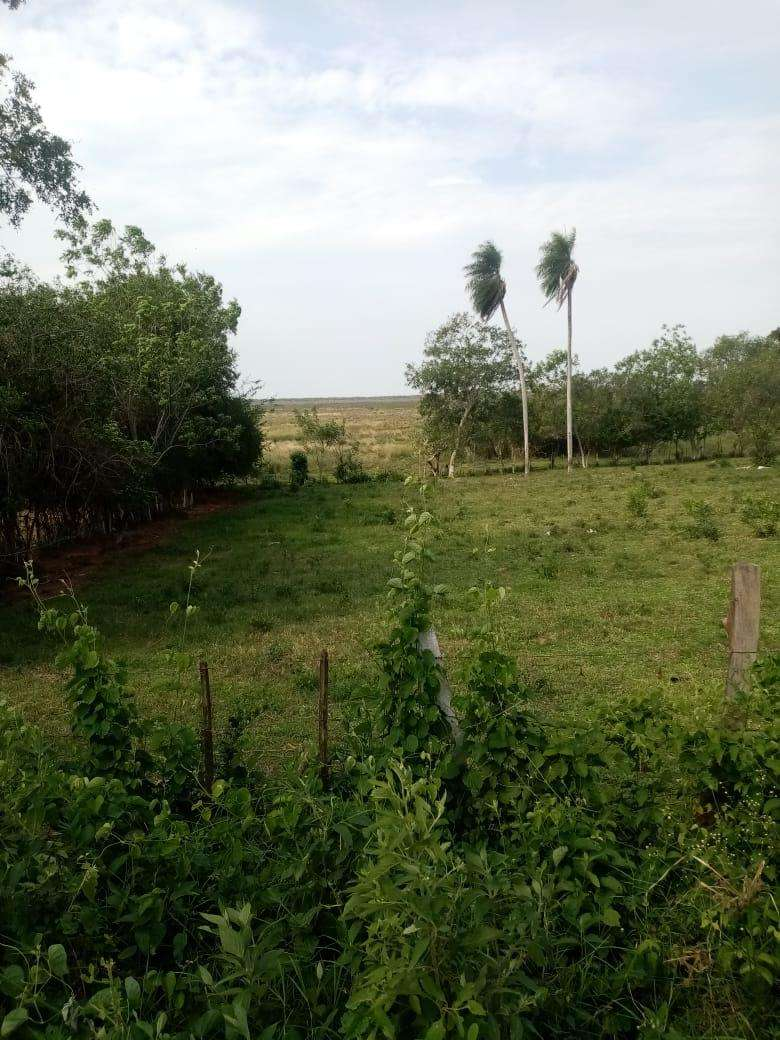 Terreno de 15 hectáreas - 3