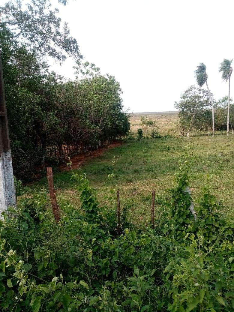 Terreno de 15 hectáreas - 5