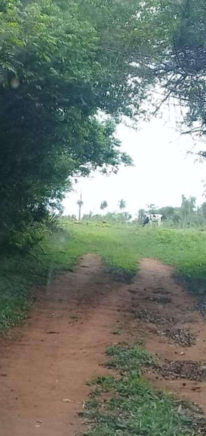 Propiedad con arroyo en Piribebuy zona Chololo - 3