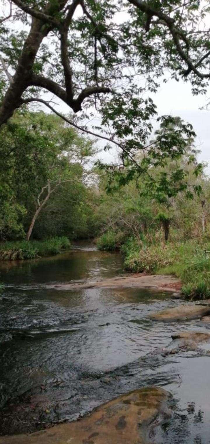 Propiedad con arroyo en Piribebuy zona Chololo - 4