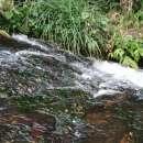 Propiedad con arroyo en Piribebuy zona Chololo - 7