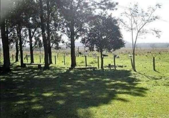 Propiedad de 130 hectáreas en Paraguarí COD 1499 - 2